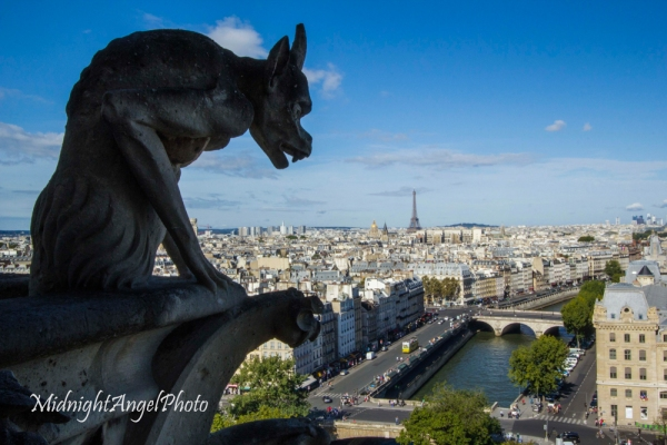 The View from on top of the Cathédrale Notre Dame de Paris