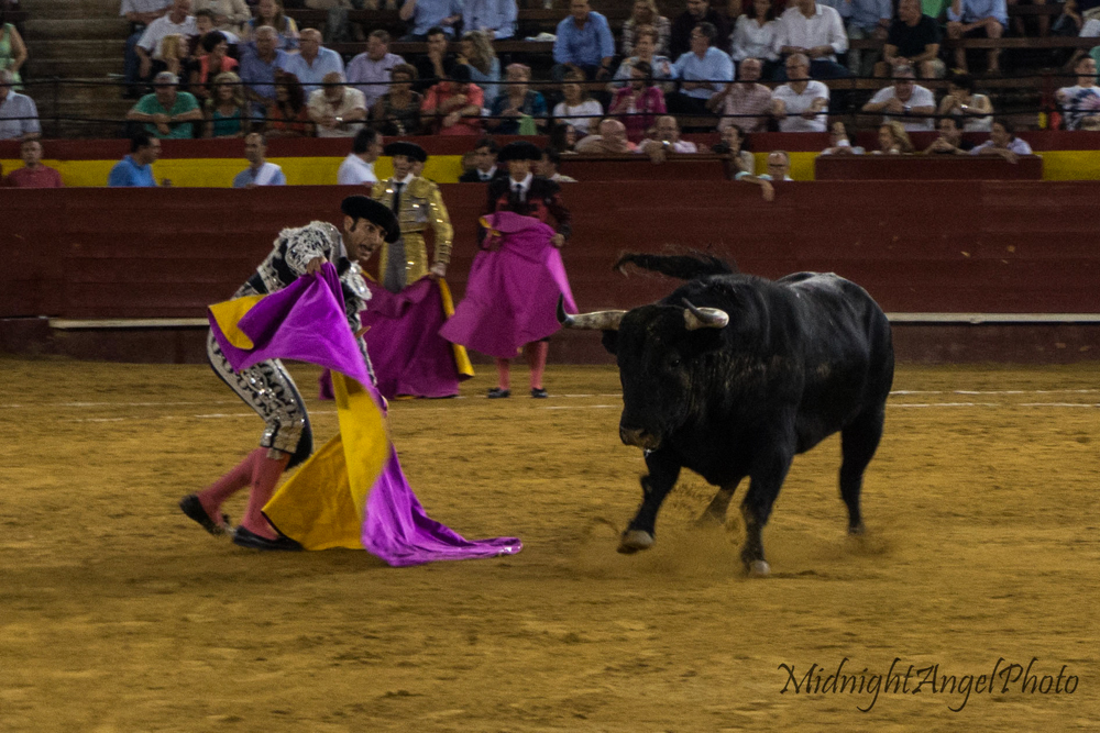 The bull charges the Banderillos during the Tercio de Veras