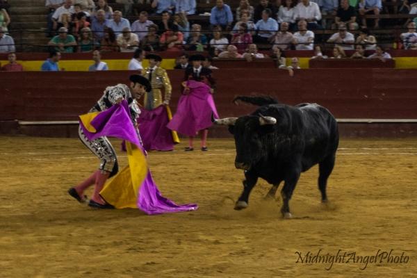 The Banderillos tease the bull during the Tercio de Veras