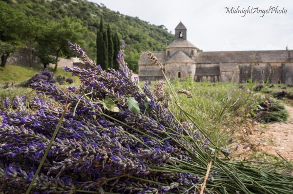 Sénanque Abbey & the Freshly Harvested Lavender