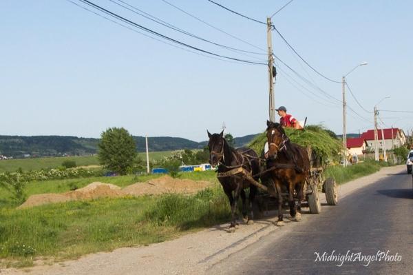 A Common Sight in Romania