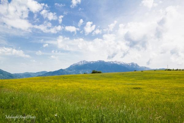 The gorgeous countryside outside of Bran, Romania