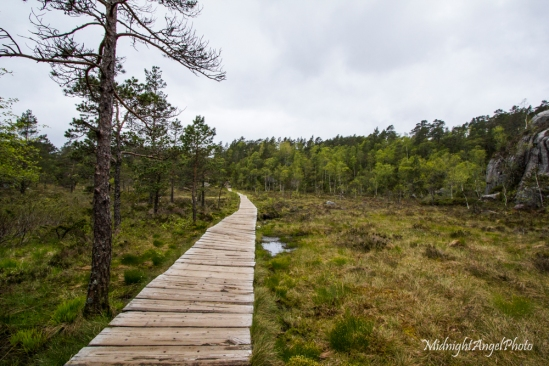 The wet, flat section with its boardwalk, easy walking here!