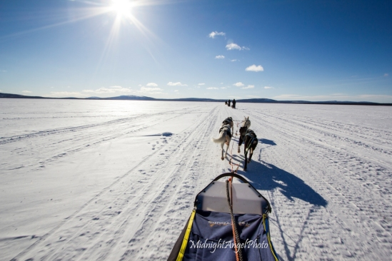 Dog sledding on day 3 across a frozen river or lake