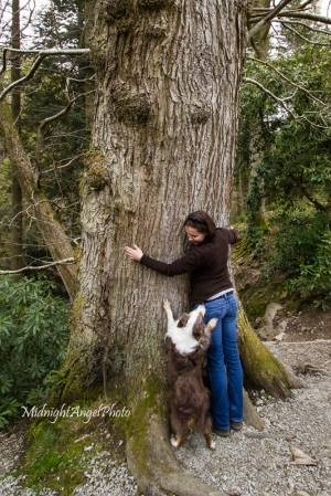 Rusty wanted to help me show just how big the tree was at Aira Force